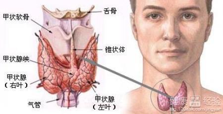 就去医院检查了一下,结果检查之后医生说是甲状腺结节,想问问这个病