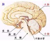 小脑萎缩怎么针灸
