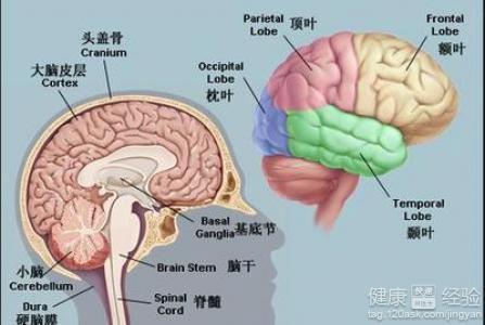 老人小脑萎缩的症状