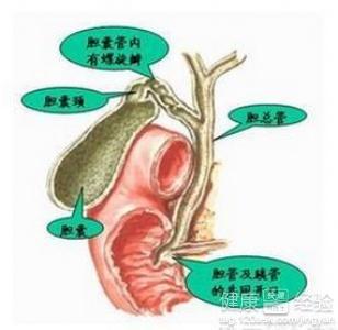 胆结石药物排石的原理_所以根据我们人自身的生理特点,理论上最大横径为0.6cm以下的结石都可以用药物排石疗法;2014年《中国泌尿外科诊疗指南》中提到
