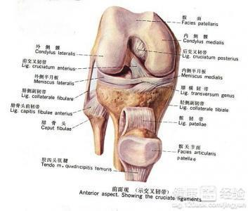 膝关节半月板损伤并发症膝关节半月板损伤会引发什么疾病