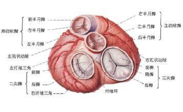 心肌病首发症状是易疲乏