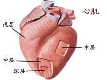 小儿心肌炎如何进行康复治疗