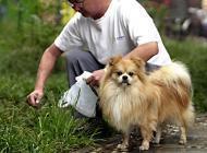狂犬病的家庭应急措施