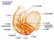 产后泌尿道感染如何诊断鉴别
