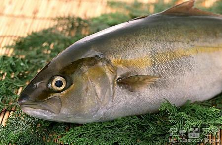 春季宝宝吃什么鱼好