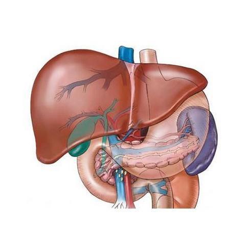 诱发重度脂肪肝的因素有哪些?