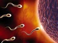 怎样检验精子质量专业技术方法让检验精子质量更准确