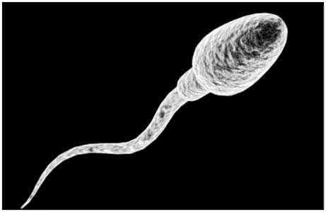 怎么使精子质量提高提高精子质量有哪些办法