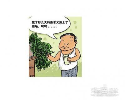 凉开水浇花.使福字糕点茂密,使其早开花.台湾带花木的叶子图片