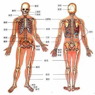 两边肋骨疼是怎么回事图片