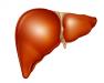得了丙肝有哪些症状  从急慢性丙肝为你揭晓