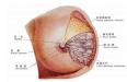 怎么让乳腺囊肿消失 做好7步让乳腺囊肿去无踪
