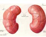 小儿急性肾小球肾炎