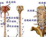 小儿脊髓前动脉综合征