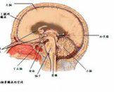 心脏乳头样弹性纤维瘤