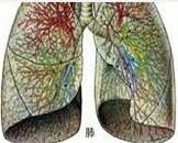 休克型肺炎