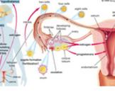 胃肠道癌转移卵巢