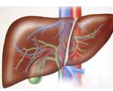 先天性肝囊肿
