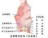 先天性直肠肛门畸形