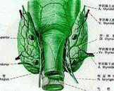 小儿假性甲状旁腺功能减低症