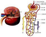 小儿肾上腺皮质与髓质增生并存综合征