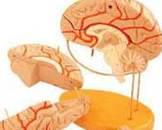 原发性甲状旁腺功能亢进症