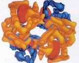 血红蛋白D病