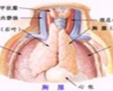 先天性胸腺发育不全(其他名称:DiGeorge综合征,第3、4对咽囊综合征,Nezelof综合征)
