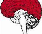 嗅沟脑膜瘤