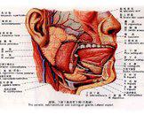 咽部脊索瘤