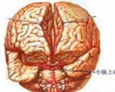 小儿出血性休克和脑病综合征(其他名称:小儿出血性休克和脑病综合症)
