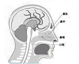 鼻咽癌的远处转移