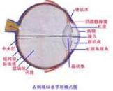 角膜反射迟钝