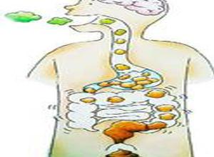 肠道吸收水分增加