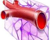 高度膨胀的毛细血管襻