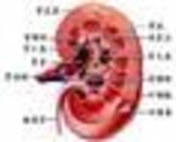 慢性肾损害