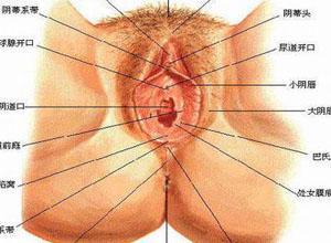 大阴唇或肛门大小不等、质软无压痛包块