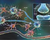 肋间神经炎有哪些表现 肋间神经炎的四个表现危害身体健康