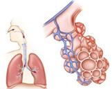 肺栓塞栓形成的原因有哪些