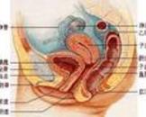 患有宫颈囊肿怎么治疗 宫颈囊肿活检是癌症吗
