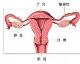 有没有人对精子过敏