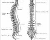 婴儿脊柱侧凸