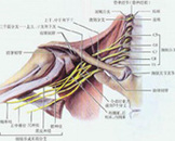 臂丛神经痛