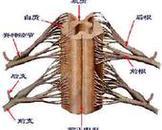 脊髓压迫症