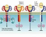 氨基酸代谢病