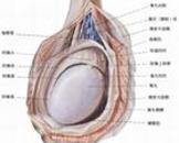 睾丸疼痛吃什么药最好 睾丸疼痛怎么治疗