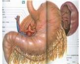 健胃消食片治疗胃下垂吗 哪些药可有效治胃下垂