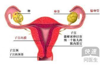 输卵管造影怎么做