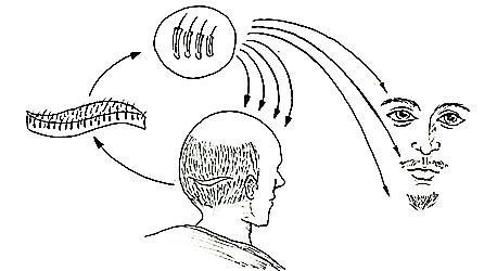 FUT植发技术示意图